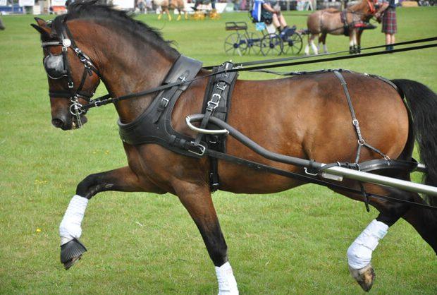 هارنس اسب